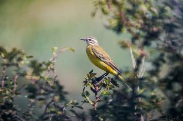 BirdExperience – Die Messe für Vogelbegeisterte!