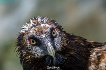 Von der Zoo- zur Wildlife-Fotografie