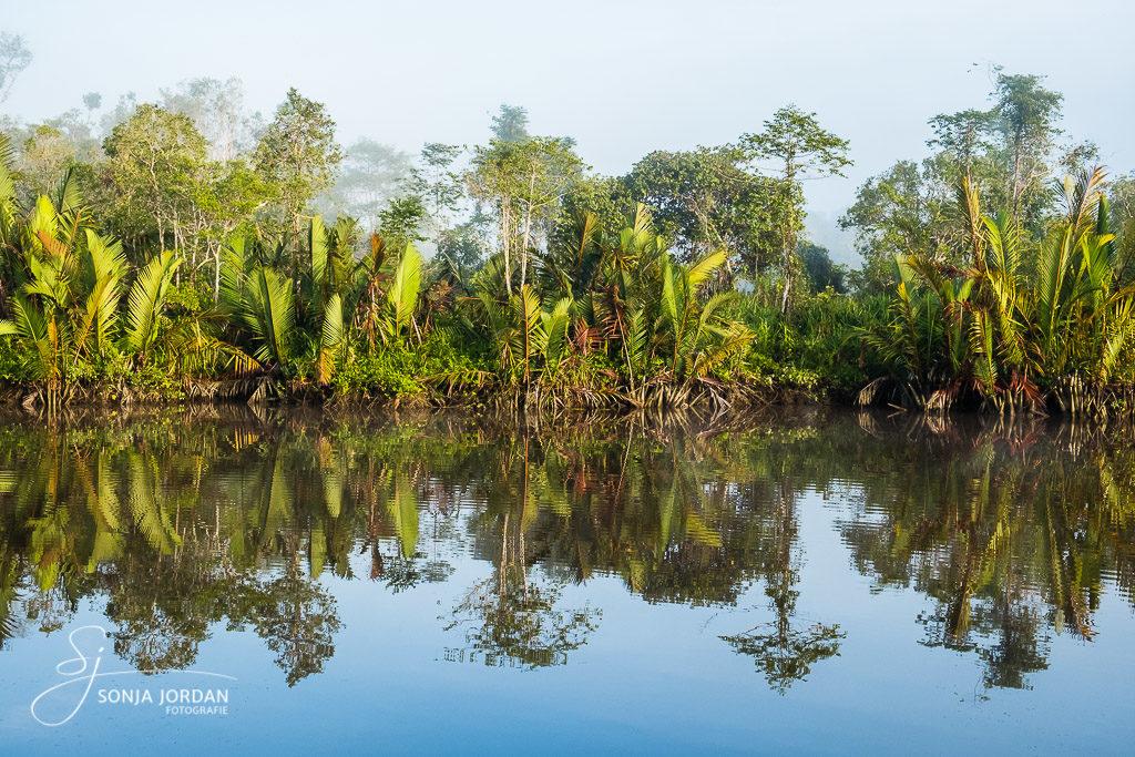 Spiegelung im Fluss Sungai Sekonyer