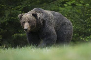 Unter wilden Bären – Buchveröffentlichung