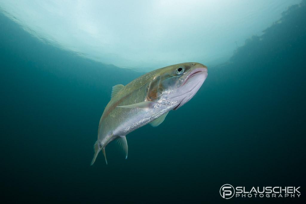 Unterwasserfotografie Workshop