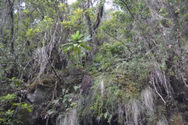 Madeira, großartige Landschaft und Vegetation