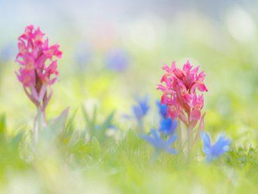 Spielarten in der Welt der Orchideen