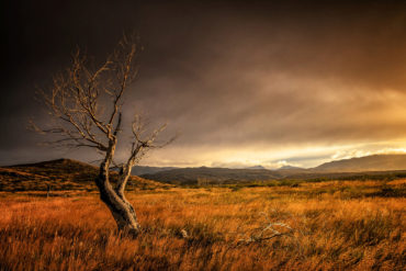 Lebendiges Patagonien