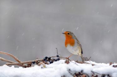 Faszination Birdwatching