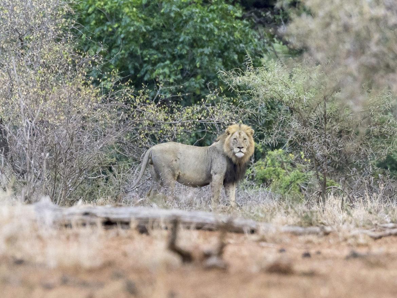 Spurensuche – Zu Fuß unterwegs im Krüger Nationalpark