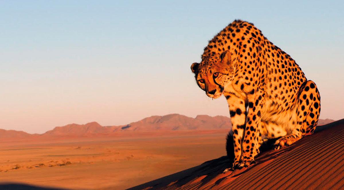 Namibia VTNÖ Magazin Naturfotografie 2020