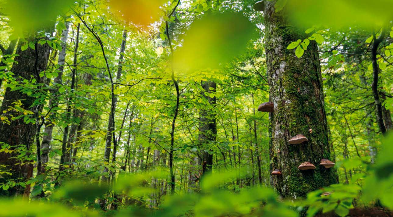 Österreichs Wilde Wälder - VTNÖ Naturfotografie Magazin 2020