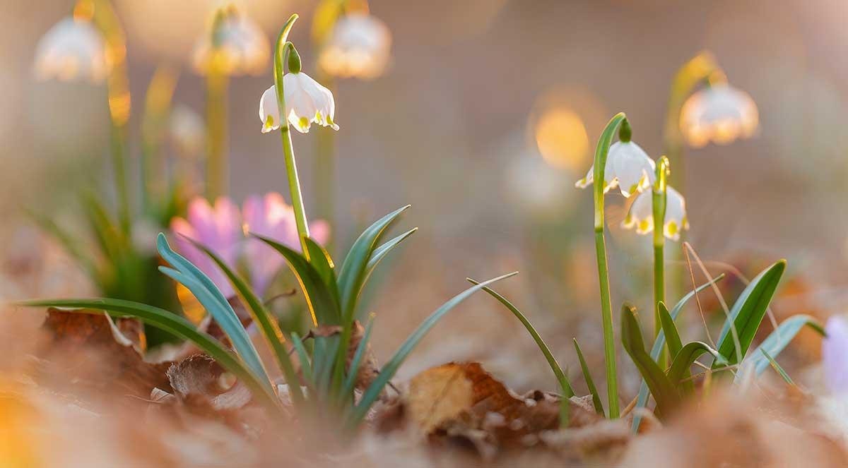 Den Frühling durchs Makroobjektiv entdecken