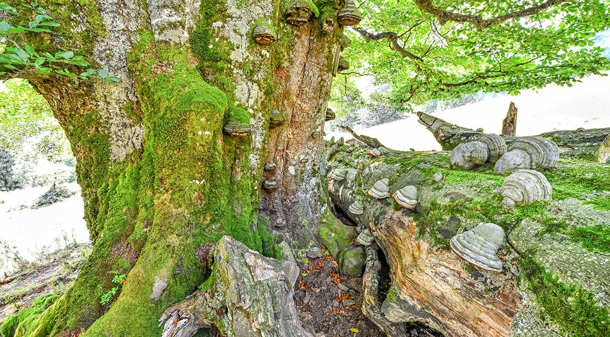 Nationalpark Kalkalpen im Magazin für Naturfotografie