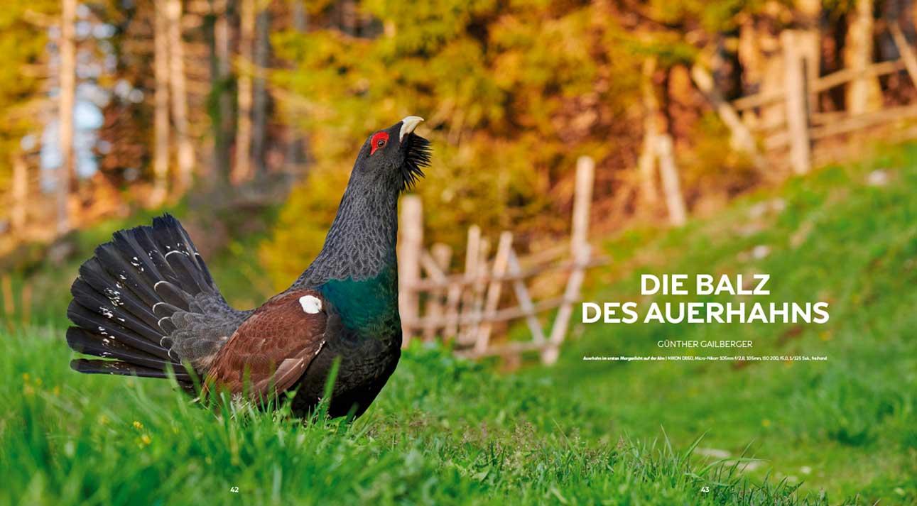 Slider VTNÖ-Magazin Auerhahn
